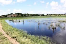 Kinka wetlands